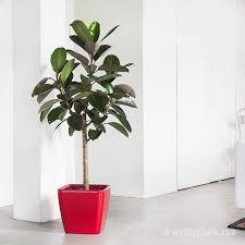 Có thể đặt cây ngay lối ra vào tạo nên sự mát mẻ mỗi khi đi làm về